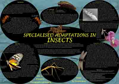 poster on the various adaptations of insects